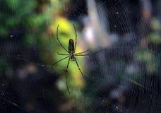 蜘蛛和万维网 免版税库存照片