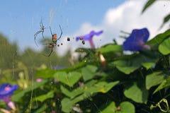 蜘蛛和牺牲者在花 库存图片
