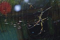 蜘蛛和牺牲者 库存图片