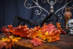 蜘蛛和秋天橡木叶子 库存图片