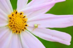 蜘蛛和花 库存图片