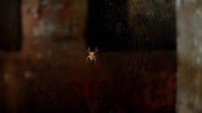 蜘蛛和蜘蛛网在一个被放弃的房子的窗口里 黑暗的可怕恐怖场面 影视素材