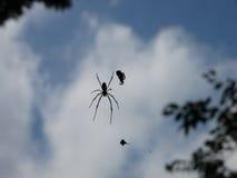 蜘蛛和诱饵在天空中 库存照片
