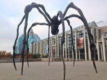 蜘蛛在加拿大 免版税库存照片