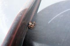 蜘蛛在夏天 库存照片