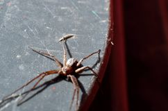 蜘蛛在夏天 免版税图库摄影