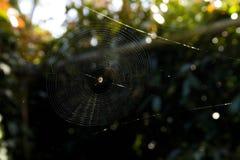 蜘蛛在大网的中心反对黑和绿色Bokeh背景的 免版税库存照片