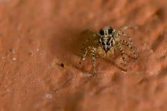 蜘蛛在家 库存照片