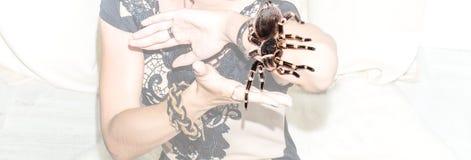 蜘蛛在手上  库存照片