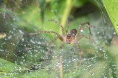 蜘蛛在模糊的自然本底中 免版税库存图片