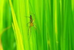 蜘蛛在泰国 免版税库存图片