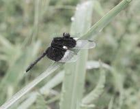 蜘蛛在泰国 库存图片