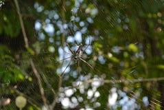 蜘蛛在热带森林里 免版税库存图片