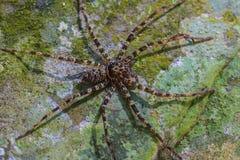 蜘蛛在石头的森林里 免版税库存照片