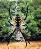 蜘蛛在窗口里 库存图片