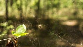 蜘蛛在网的中心在森林里 免版税库存图片