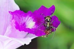 蜘蛛在花的猎人 图库摄影
