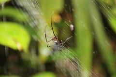 蜘蛛在他的网的中心坐 免版税库存图片