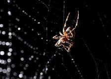 蜘蛛坐在狩猎上的一个网 图库摄影