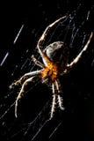 蜘蛛坐在狩猎上的一个网 库存图片
