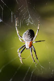 蜘蛛坐在狩猎上的一个网 免版税图库摄影