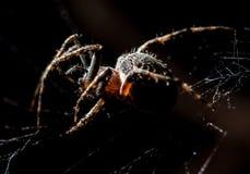 蜘蛛坐在狩猎上的一个网 免版税库存照片