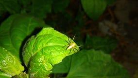 蜘蛛坐绿色叶子夜 图库摄影