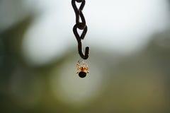蜘蛛垂悬 库存图片