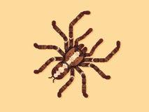 蜘蛛塔兰图拉毒蛛 也corel凹道例证向量 免版税库存图片