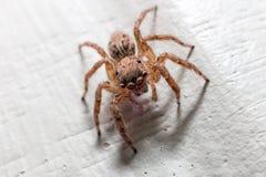 蜘蛛宏指令 库存图片