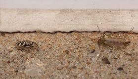 蜘蛛对飞行-宏指令接近的射击 免版税库存照片