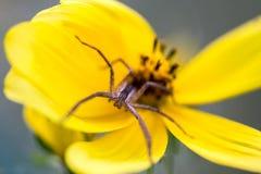 蜘蛛拜登他的时间 库存图片