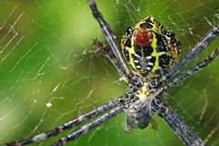 蜘蛛捕获牺牲者 图库摄影