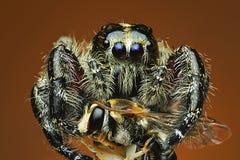 蜘蛛接近的exrtime 免版税库存照片
