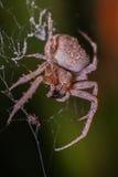 蜘蛛晚上 免版税库存图片