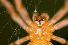 蜘蛛本质上 2009朵超级花宏观的夏天 图库摄影