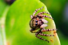 蜘蛛本质上 免版税库存照片