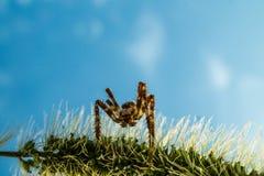 蜘蛛潜伏 免版税库存图片