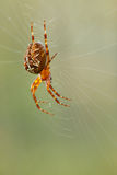蜘蛛烈士。 免版税库存照片