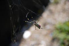 蜘蛛熔铸它` s网在阳光下 库存图片