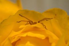 蜘蛛爬出花 免版税库存照片