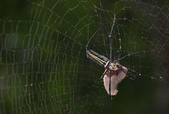 蜘蛛特写镜头  免版税库存照片