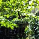 蜘蛛生活  免版税库存照片