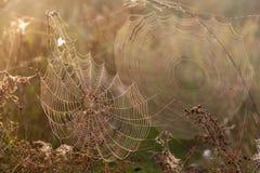 蜘蛛的两个网 免版税库存照片