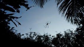 蜘蛛的剪影图片在蜘蛛网 免版税库存照片