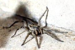 蜘蛛的眼睛 免版税库存照片