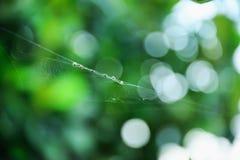 蜘蛛的食物 库存图片