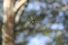 蜘蛛空转万维网 库存图片