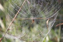 蜘蛛等待受害者 免版税库存照片