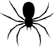 蜘蛛纲的动物一 免版税库存图片